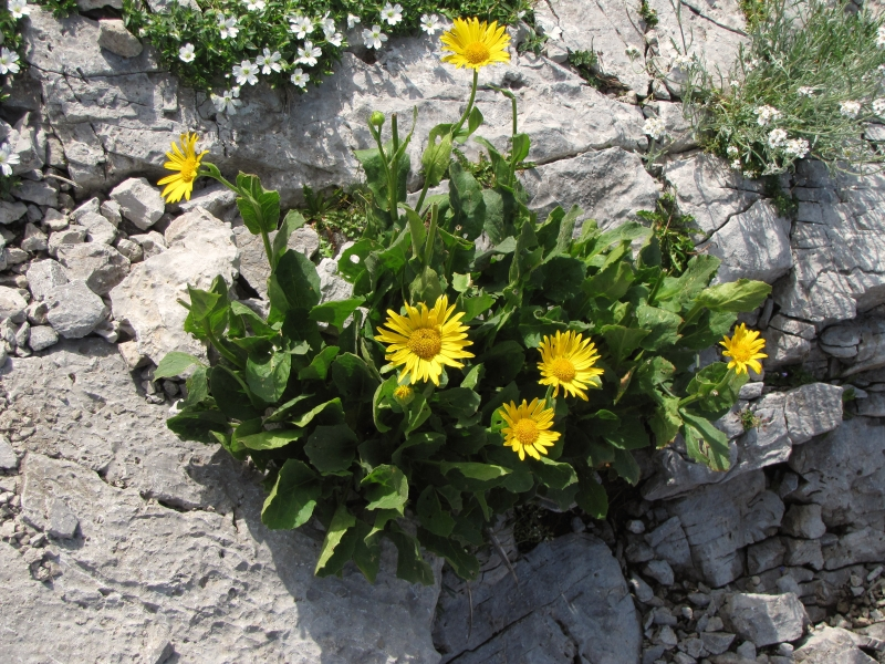 Flowers On A Rock