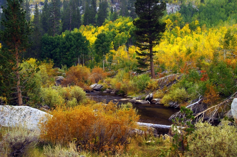Colors By The Stream