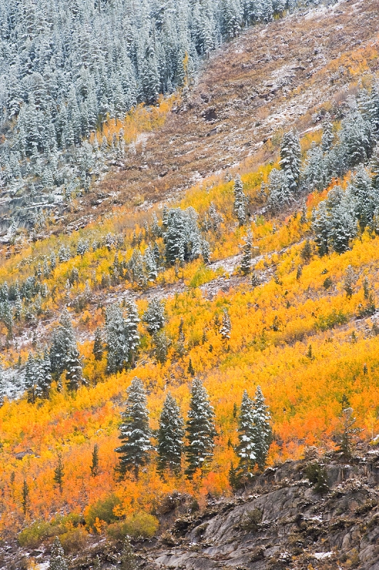 Fall Colors On Hill Slopes Along Bishop Creek Canyon