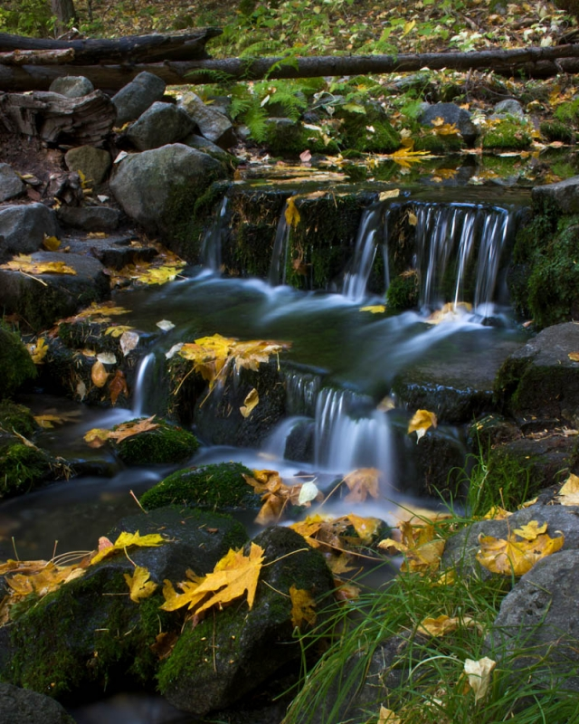 Fall At Fern Spring