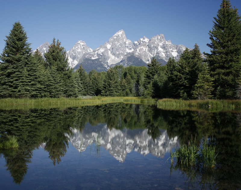 Tetons Reflected In Pool