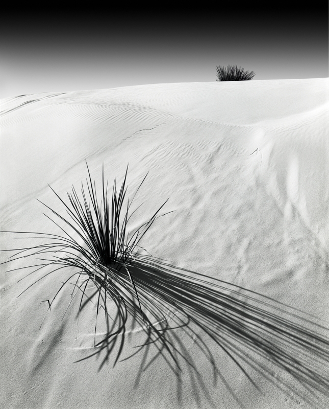 Dunes And Yucca