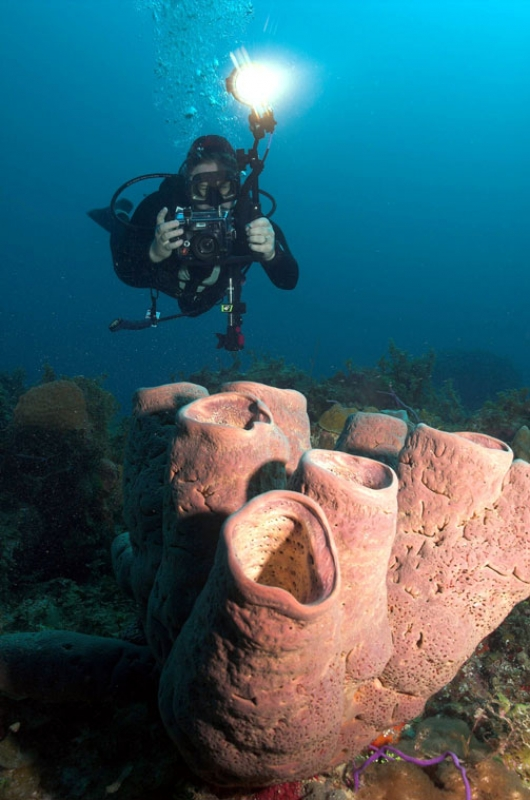 Diver Photographing Sponge