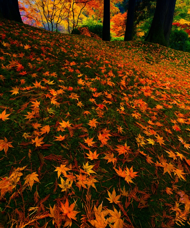 A Bed Of Leaves At The Portland Japanese Garden