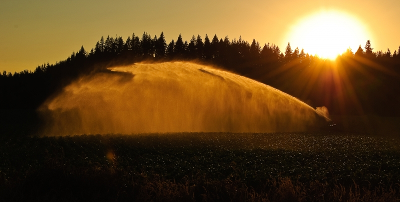 Golden Sunset And Sprinkler