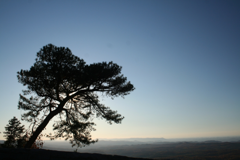 Pine At Sunset On The Cherohala Skyway