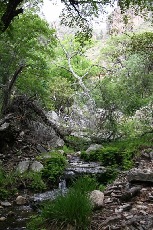 West Texas Oasis – Guadalupe Mountains