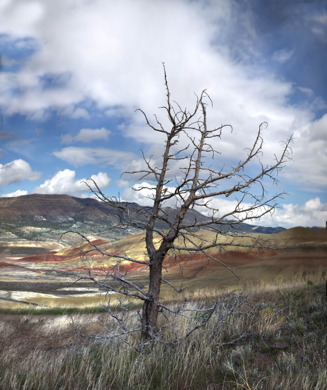 Painted Hills And Tree