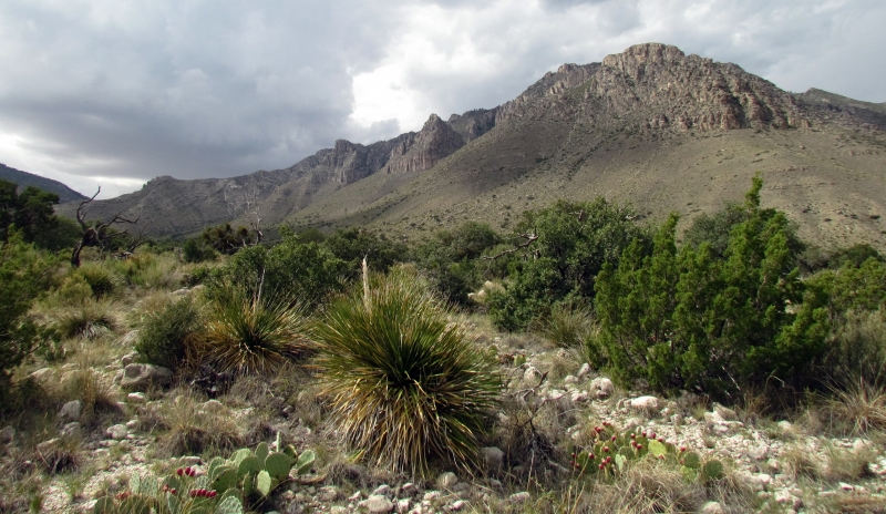 Monsoon Season At Guadalupe National Park