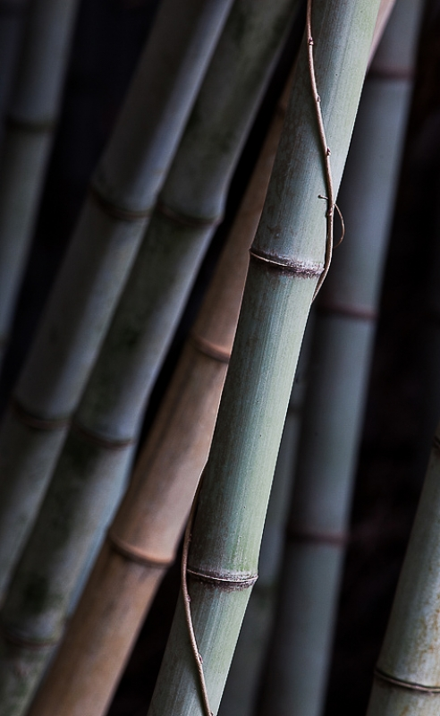 Entwined Bamboo