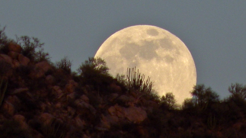 Moon Rising In Sonora Desert