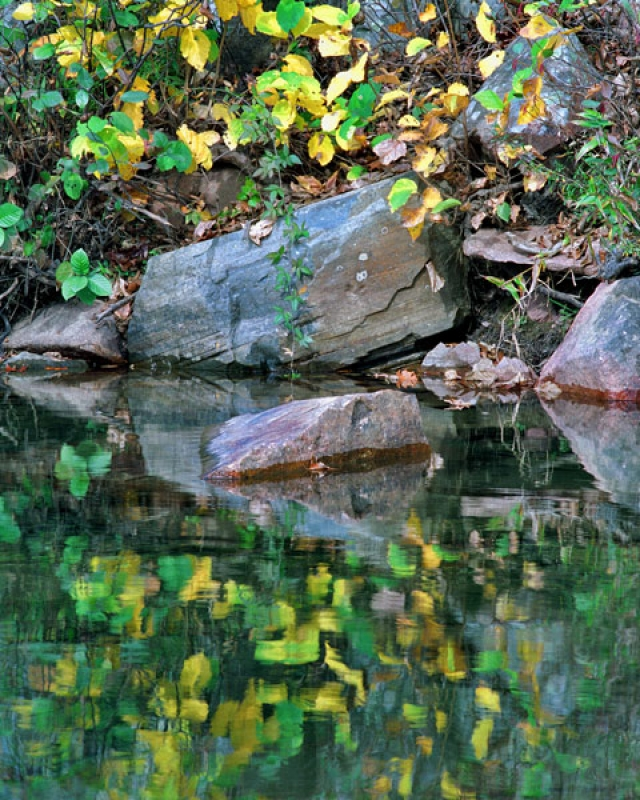 Golden Leaves Reflecting In The Black River