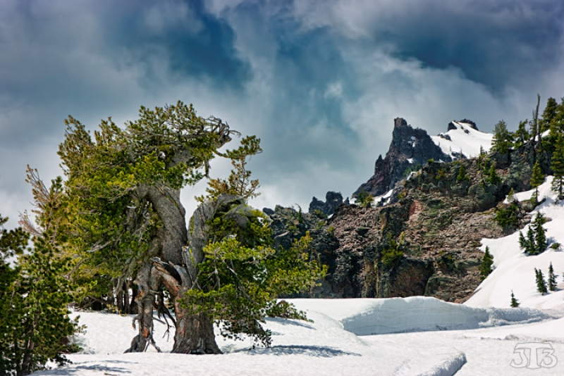 Twisted Bristlecone – Crater Lake, Oregon