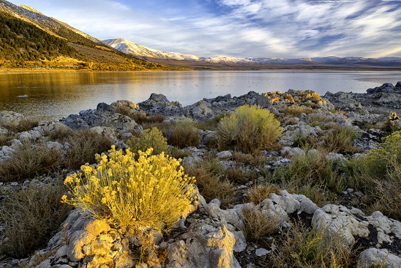 Early Morning Light, Mono Lake
