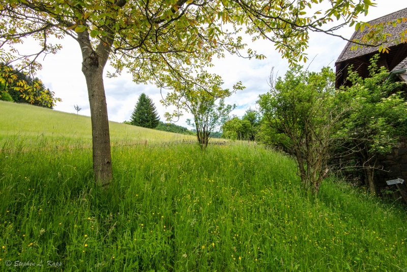 Grass Meadow To The Black Forest