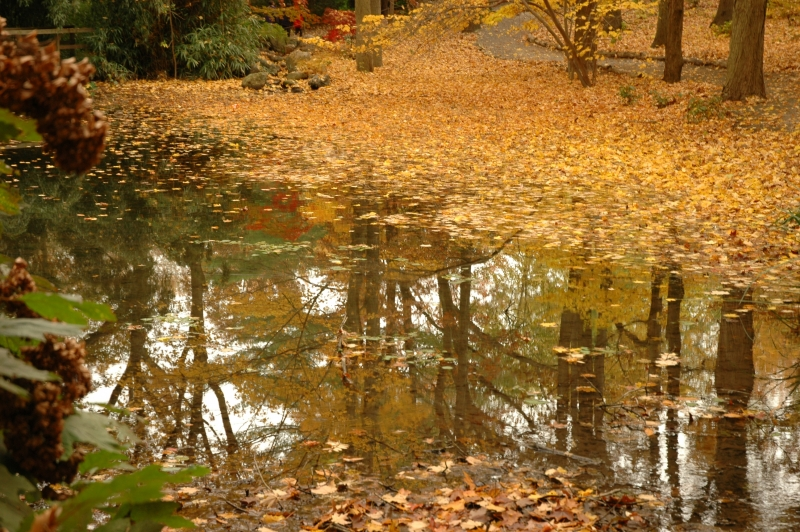 Pond In Autum