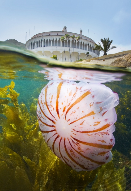 Catalina Island Casino And Jellyfish