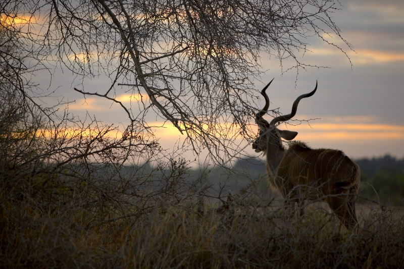 Kudu Sunset