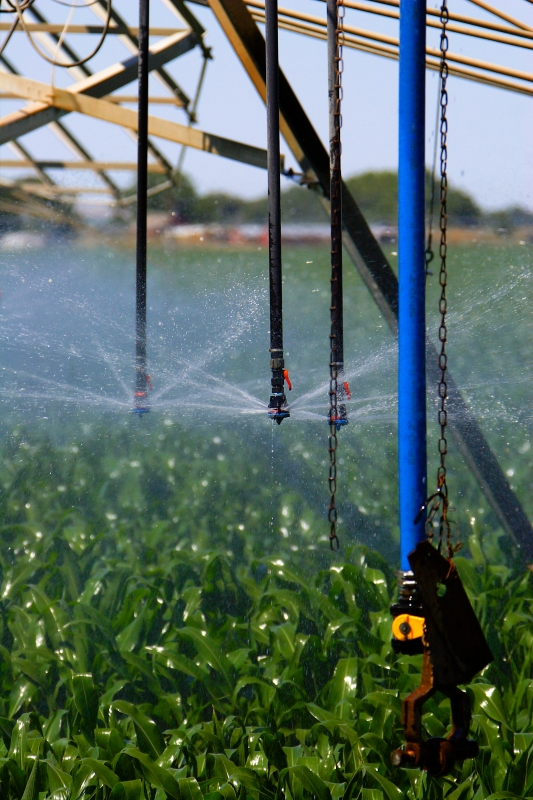Irrigation Of Corn