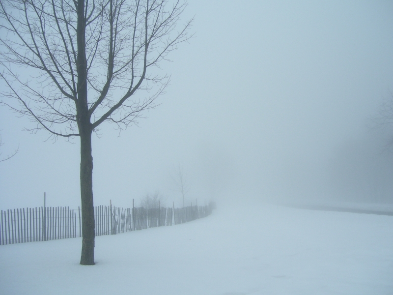 Foggy Winter Day