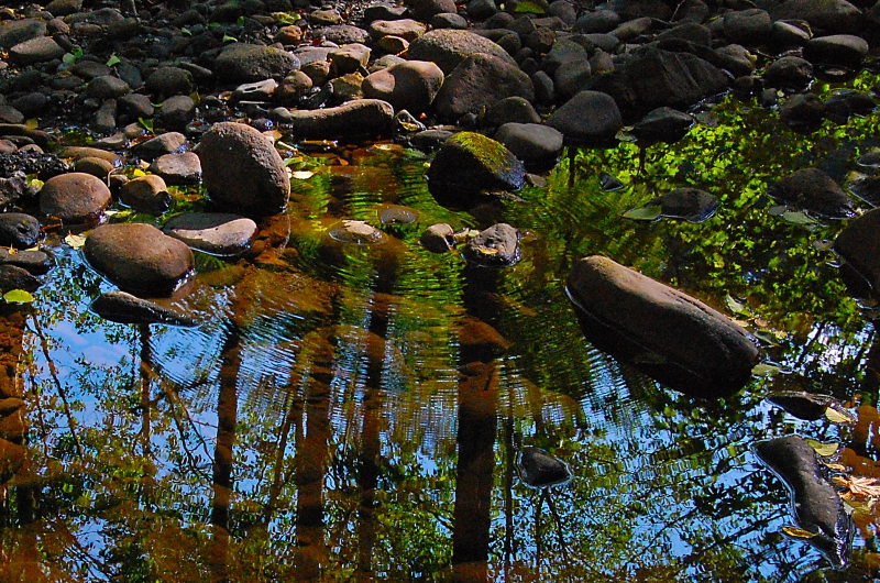 Reflections In A Stream In The Woods