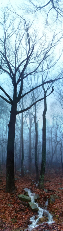 Through The Trees – Lookout Mountain Tn