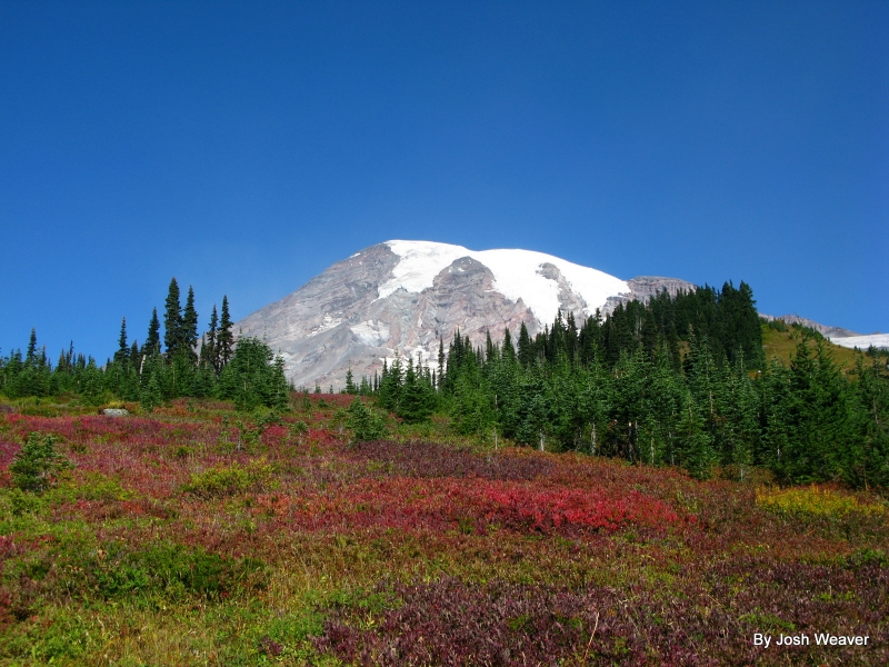 Mt. Rainier In The Fall