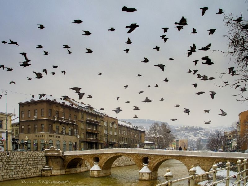 Birds Above Latin Bridge