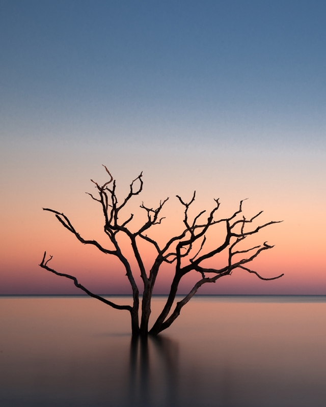 Edisto Island Tree In The Sea