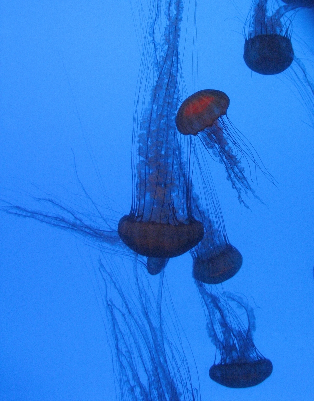 Georgia Jellies