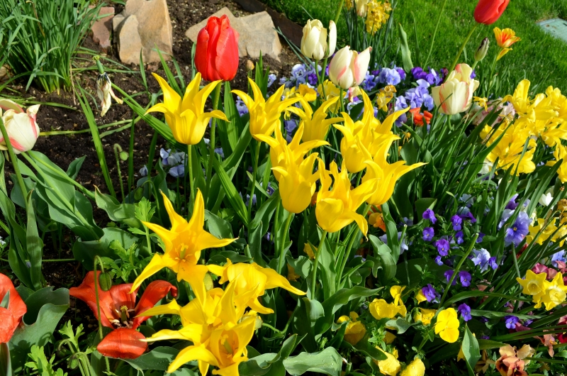 Springing With Color