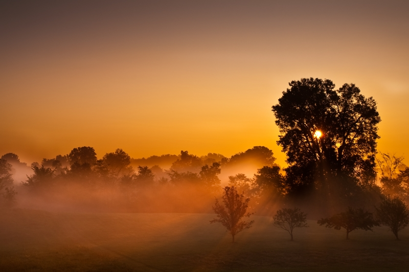 Foggy Indiana Sunrise