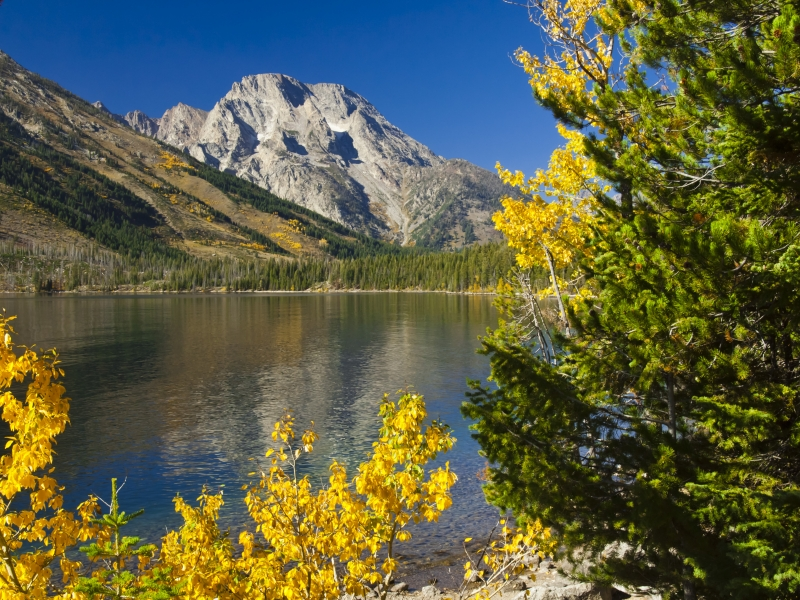 June Lake Fall