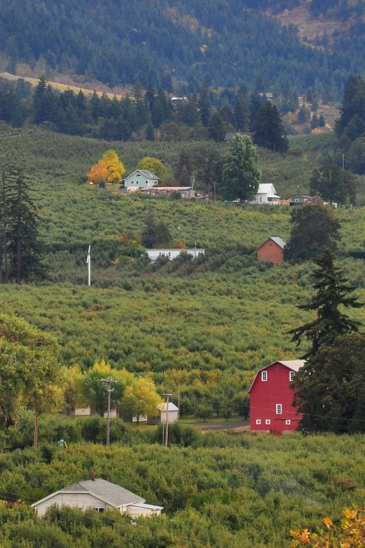 Barn And Orchards, Hood River Valley