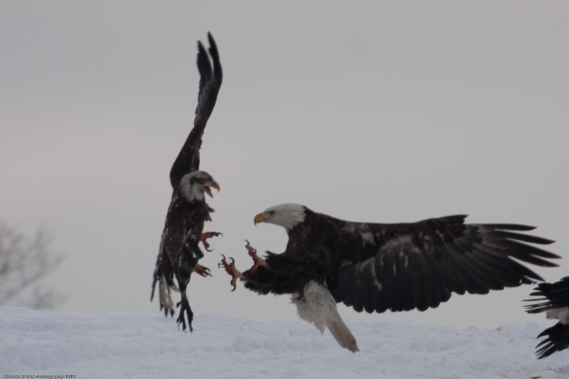 Fight In Flight