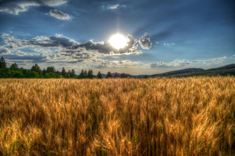 Grain Into The Sun