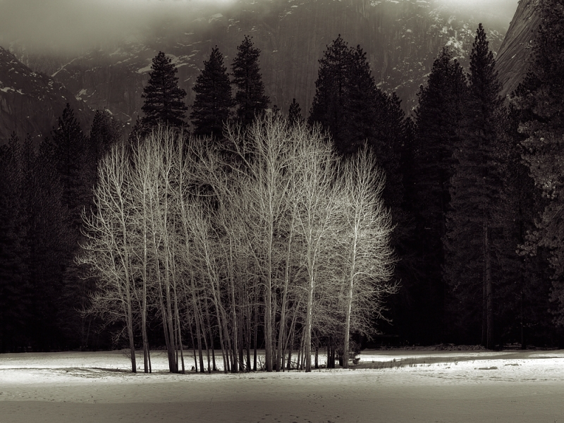 Ahwahnee Meadow, Yosemite National Park