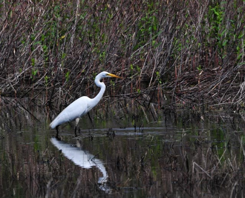 Egret At Crabtree Nature Center