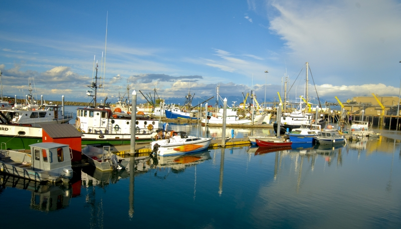 Peace On Homer Harbor
