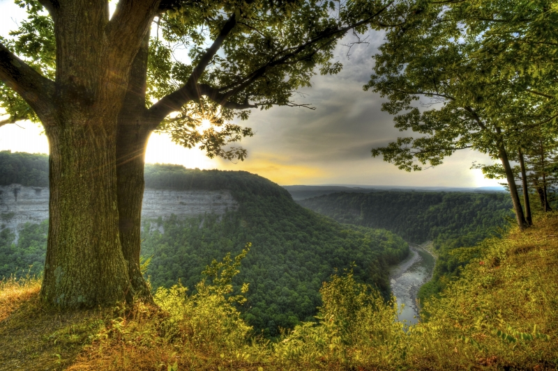 Morning At Letchworth