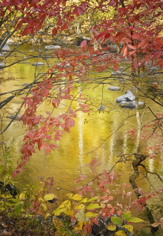 Red Leaves And Golden Water