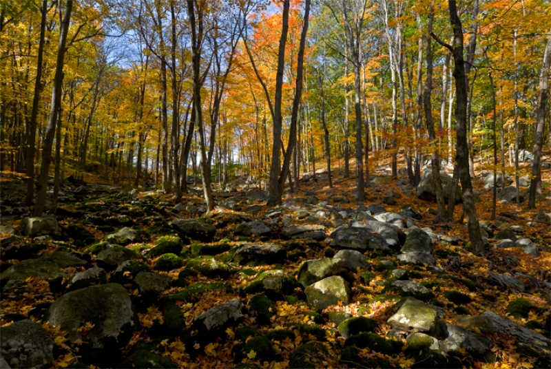 Harriman State Park, Autumn Rocks