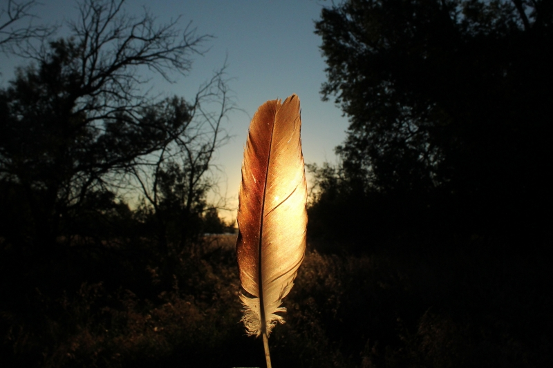Sunset Feather