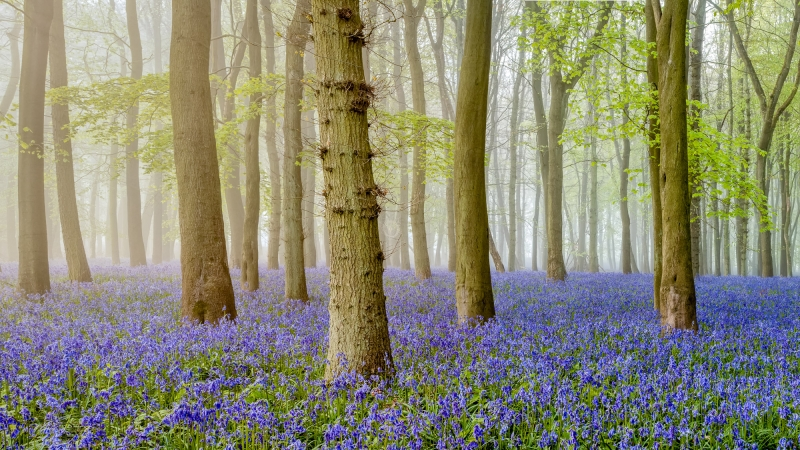 Bluebell Surprise