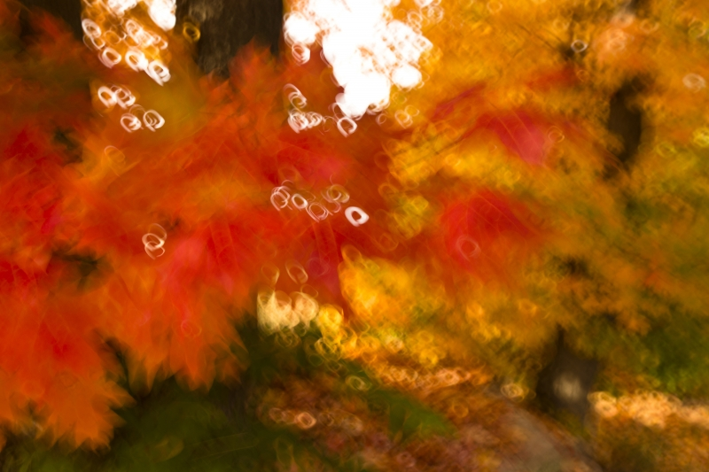 Fall Color Painting