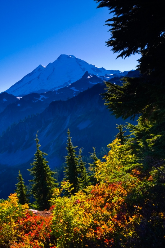 Mount Baker And Fall Foliage From Artist Point