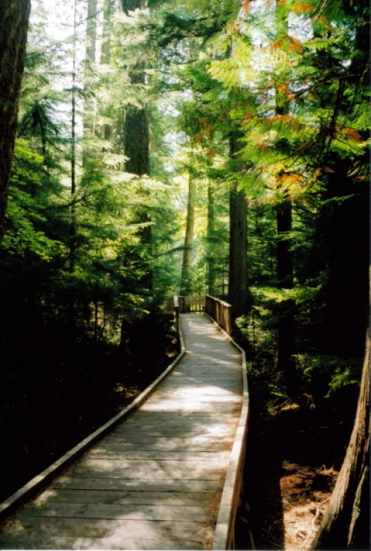 Walk Of The Cedars