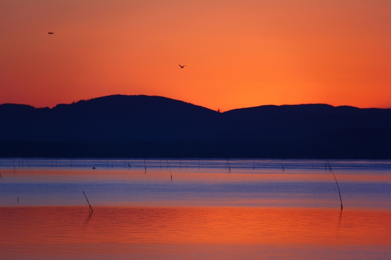 Dawn Over Willapa Bay