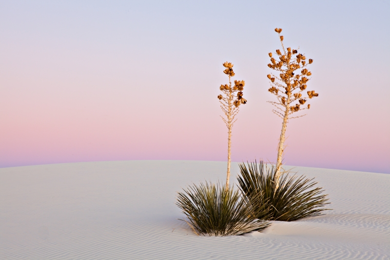 Predawn White Sands
