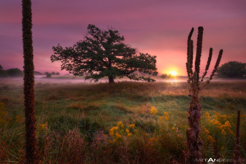 Prairie Tree Sunrise #2